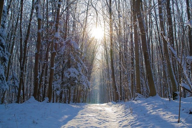 Sun on winter path
